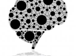 Optimising The Brain For Maximum Productivity